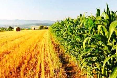 Contributi INPS 2019Aziende agricole – aliquote